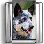 Australian Cattle Dog Italian Charm