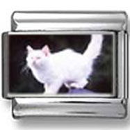 White Cat Against Black Background Photo Charm