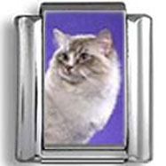 Siamese Cat against Purple Background Photo Charm