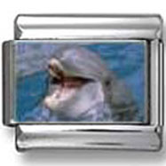 Smiling Dolphin Photo Italian Charm