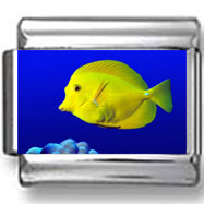 Yellow Tang Fish Photo Charm