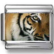 Tiger Face Photo Charm