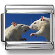 Mice Kissing Photo Charm