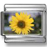 Sunflower Flower  Photo Italian Charm