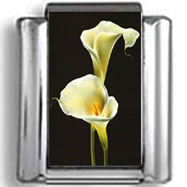 Calla Lilies Flower Still Life Photo Charm
